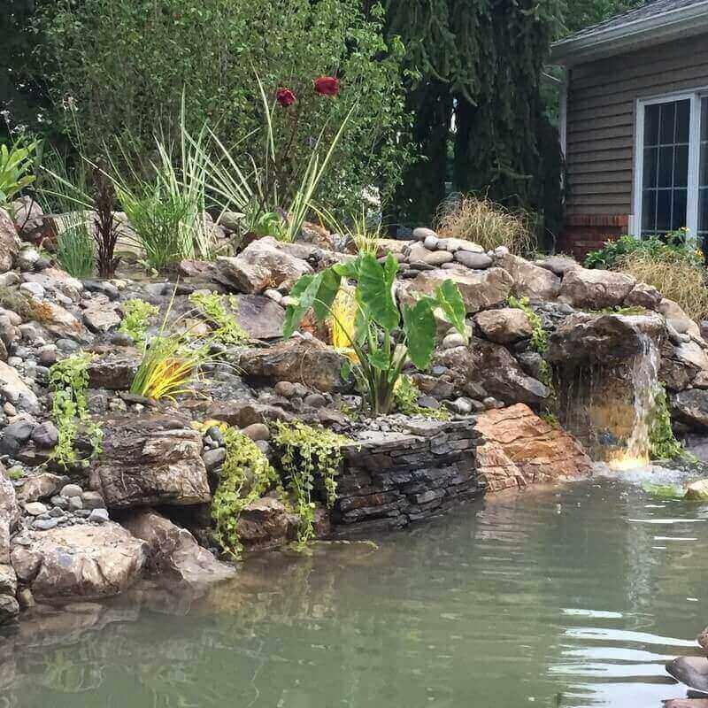 Pond & Bog Build, Branchburg, NJ