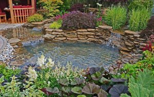 4 Types Of Aquatic Plants To Beautify Your Pond