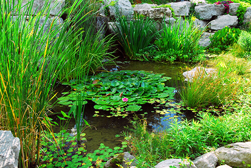 Adding Plants Into Your Pond Like A Pro