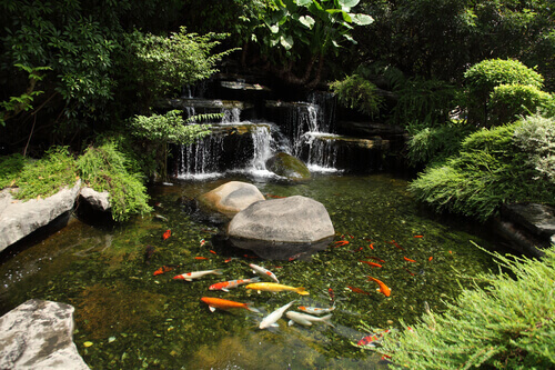 How To Convert Your Swimming Pool Into A Koi Pond