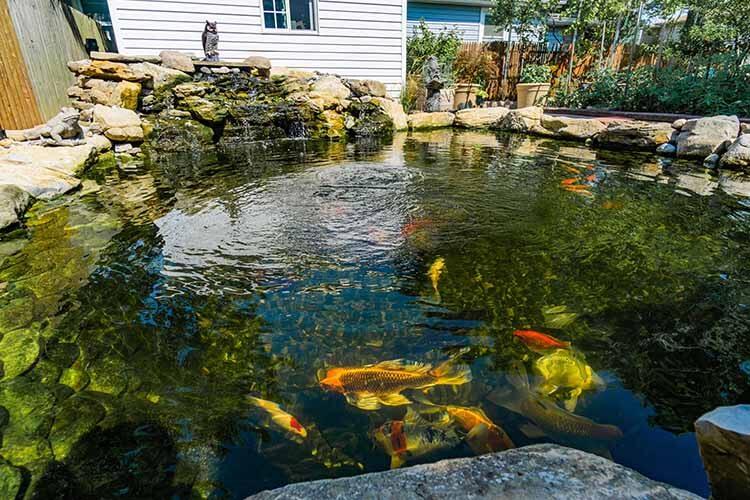 Dedicated Koi Pond
