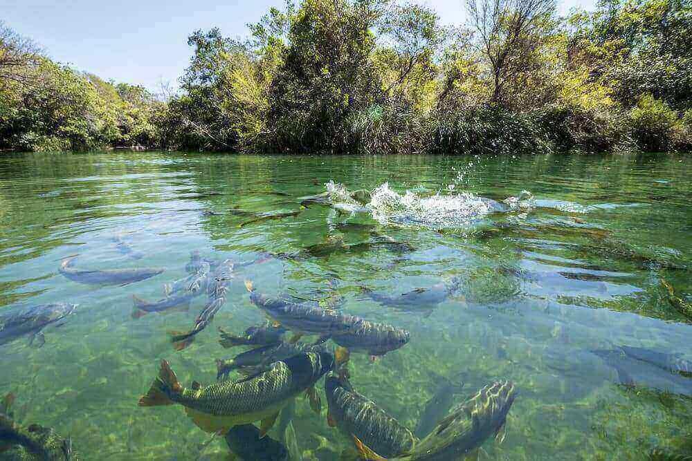 The Benefits of Electrofishing