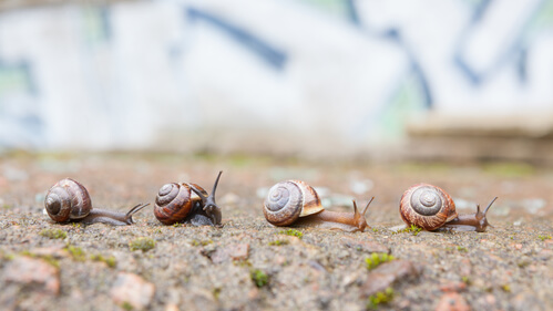 How Snails Can Benefit Your Pond