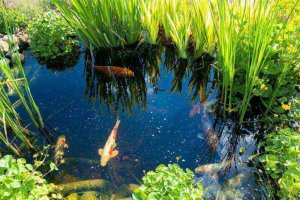 How To Choose The Best Koi Pond Filter