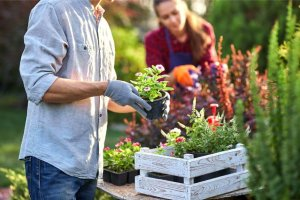 How To Conserve Water While Gardening