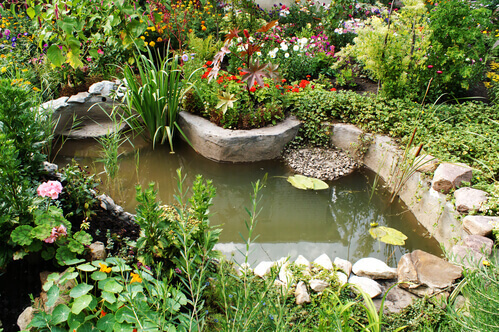 How To Use Beneficial Pond Bacteria Most Effectively