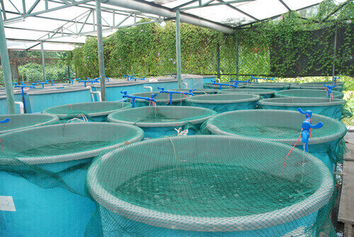How To Use Your Pond For Aquaculture
