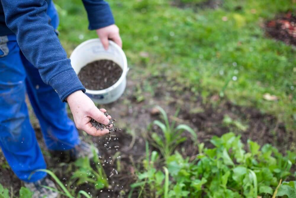 How to Choose The Best Garden Fertilizer