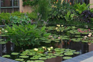 Plants That Will Naturally Clear Your Pond Water