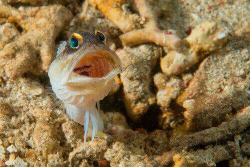 Pond Fish Spotlight: Goby