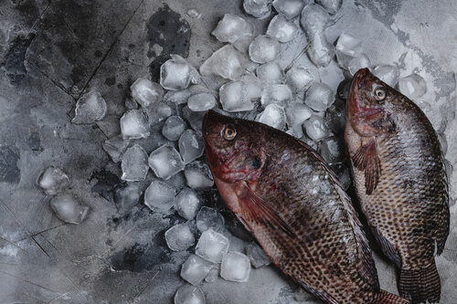 Preventing Fish Kills During The Winter