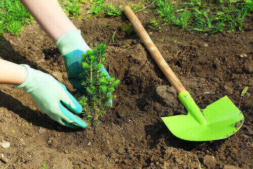 SUSTAINABLE SUMMED UP: PLANTING