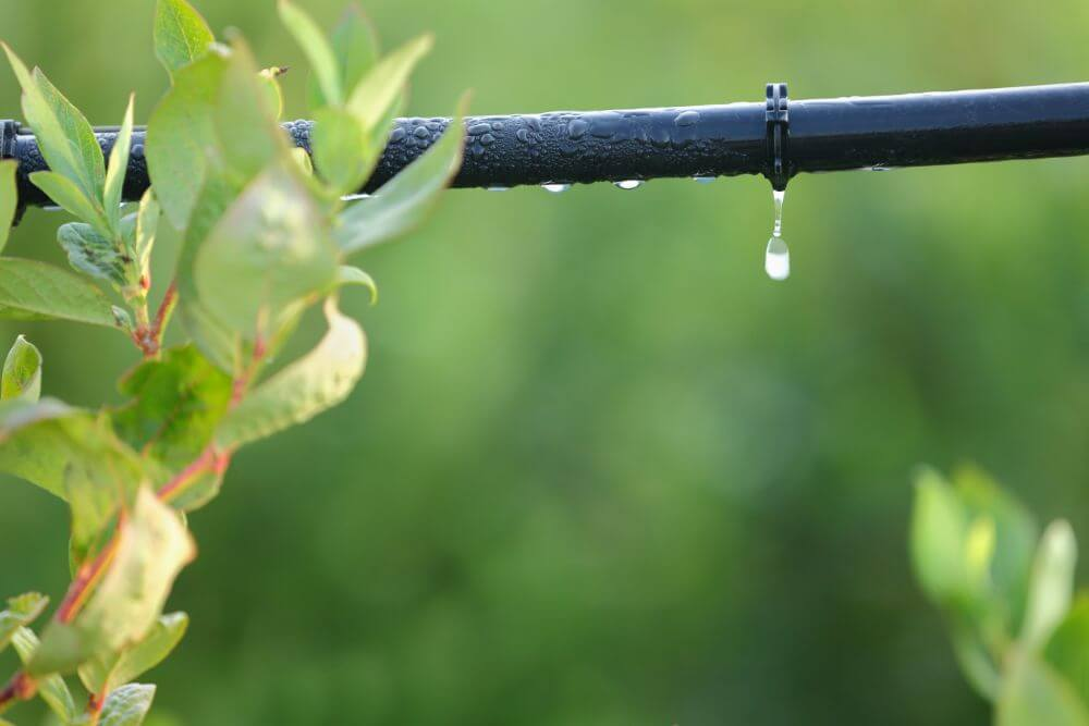 The Advantages and Disadvantages of Drip Irrigation