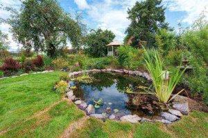 Top 10 Pond Plants To Enhance Your Landscape