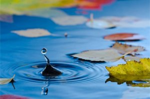 Top Tips To Keep Your Pond Leaves-Free