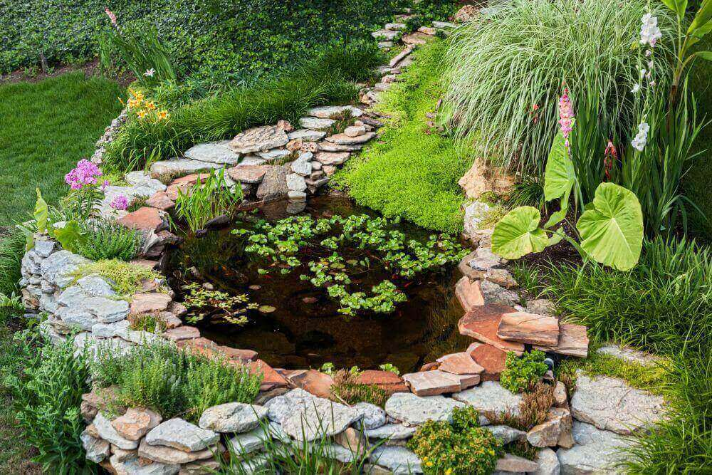 What Are The Different Type Of Ponds You Can Add To Your Backyard?