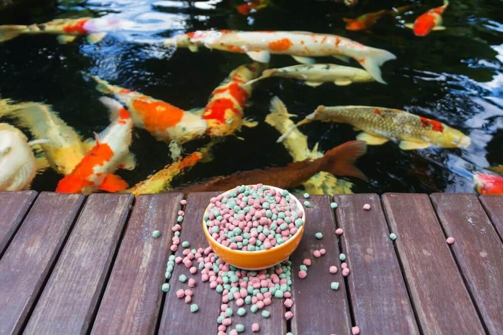 What Do Koi Fish Eat Fitz S Fish Ponds