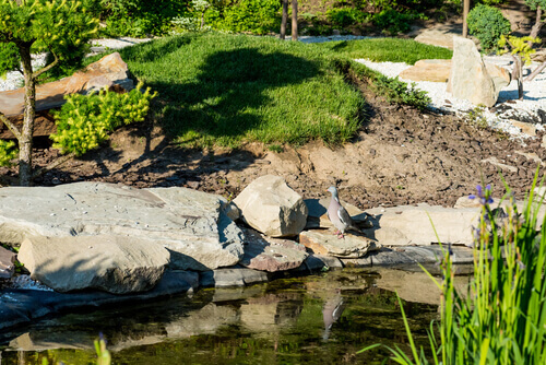 When Should You Change Pond Water?