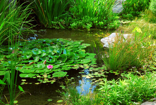 Why You Need To Perform Pond Water Testing