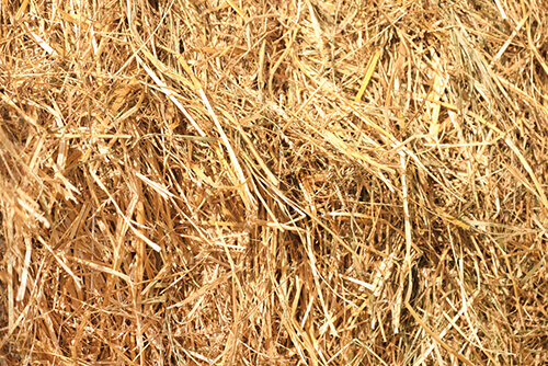 Why You Should Add Barley Straw To Your Pond