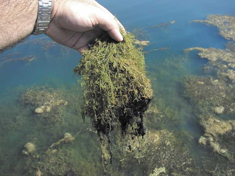 7 Most Common Pond Emergencies