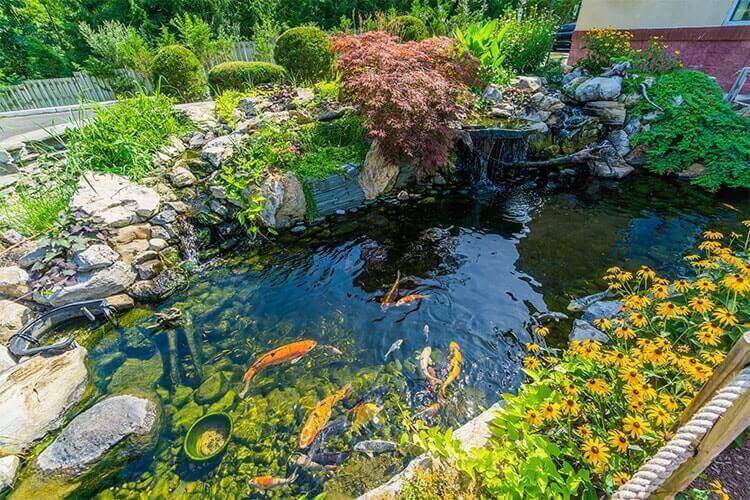 Dedicated Koi Pond