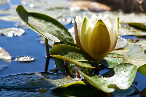 Need To Balance Your Ecosystem Pond?