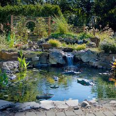 Fitzs fish pond thumb 14
