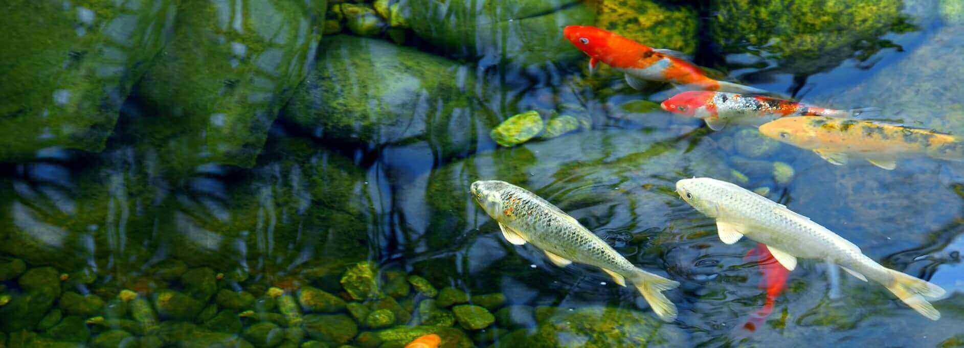 Fitz's Fish Ponds