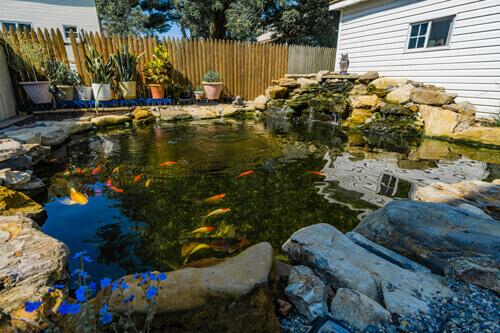 Natural Ponds3