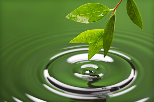 How To Save Water By Preventing Runoff