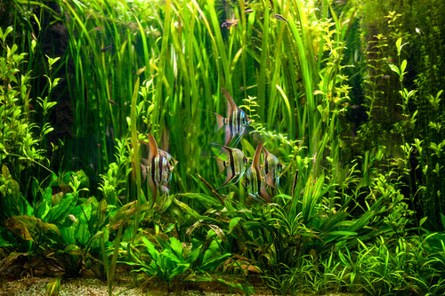 Are Submerged Plants A Good Idea For Your Water Garden?